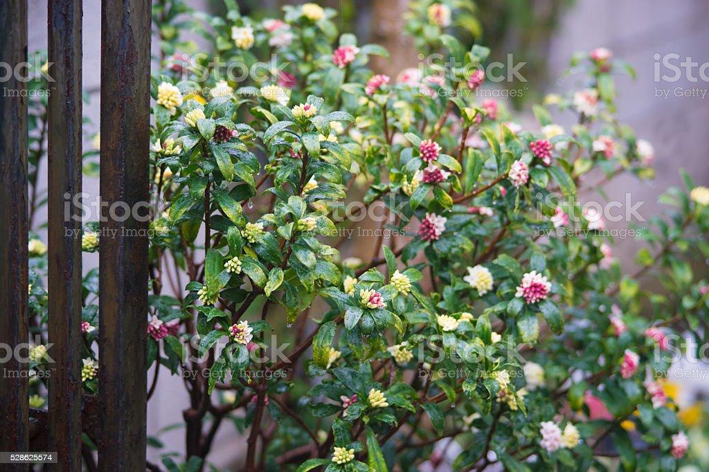 Planter (fleur) du jardin photo libre de droits