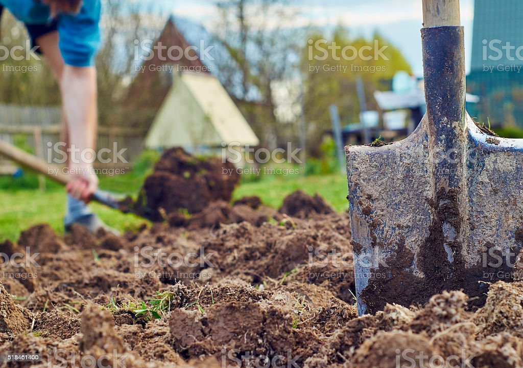 Planting of vegetables stock photo