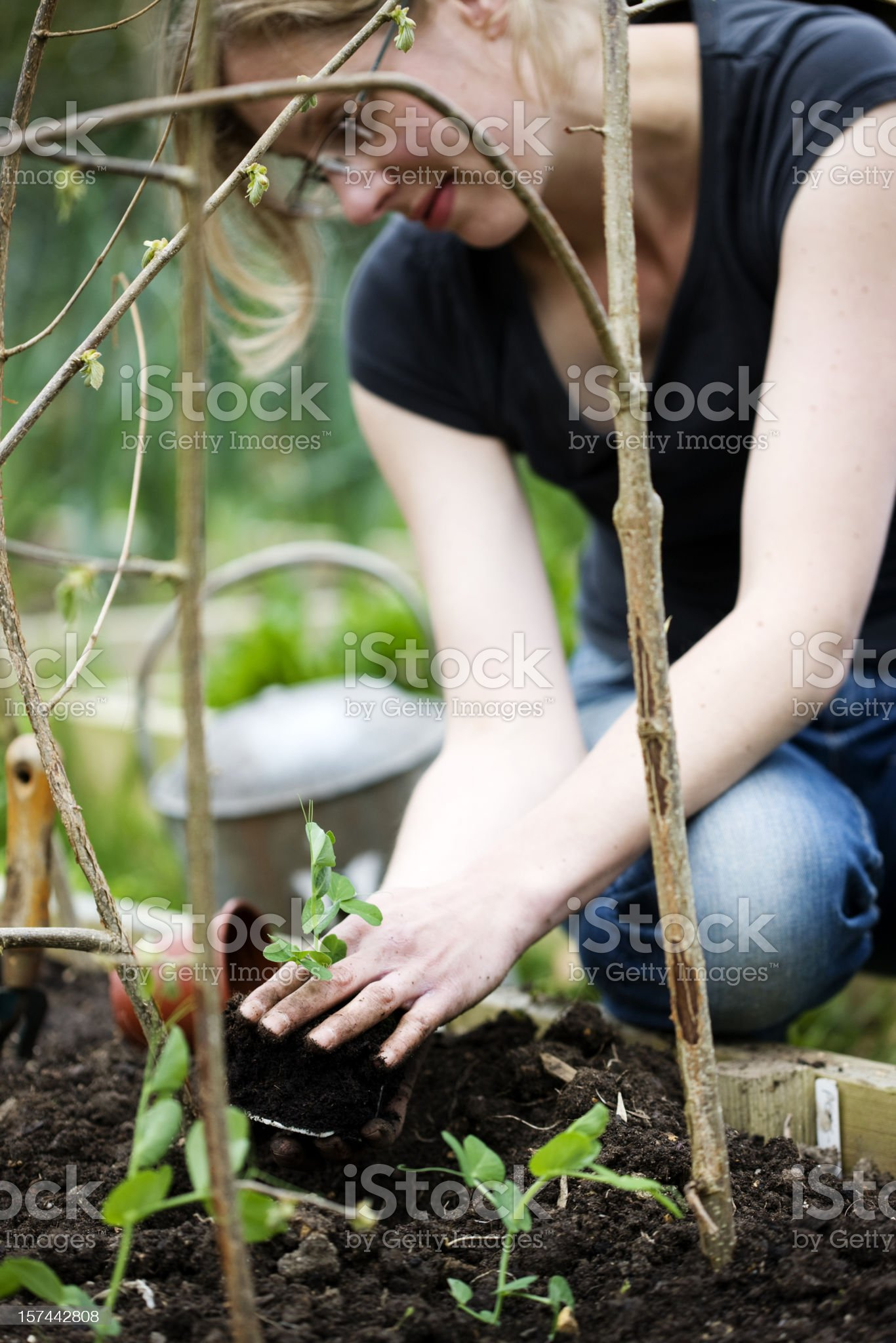 Planting out royalty-free stock photo