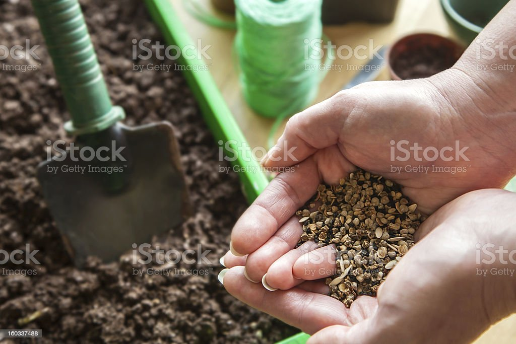 Planting - Seed in Gardener's Cupped Hands for Spring. royalty-free stock photo