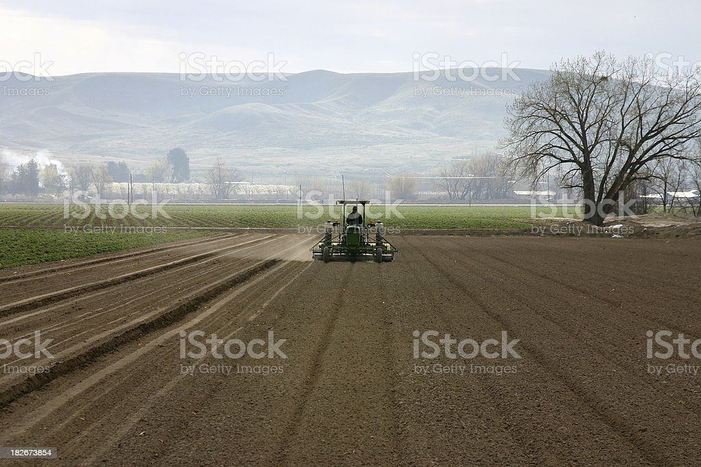 Planting Seed royalty-free stock photo