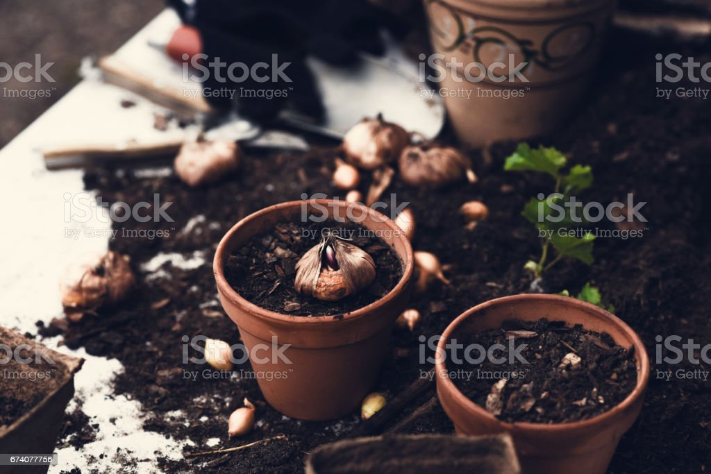 Planting seeds for garden stock photo