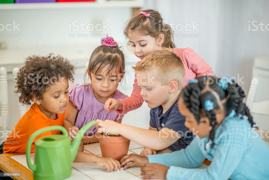 Planting Seeds in Dirt stock photo