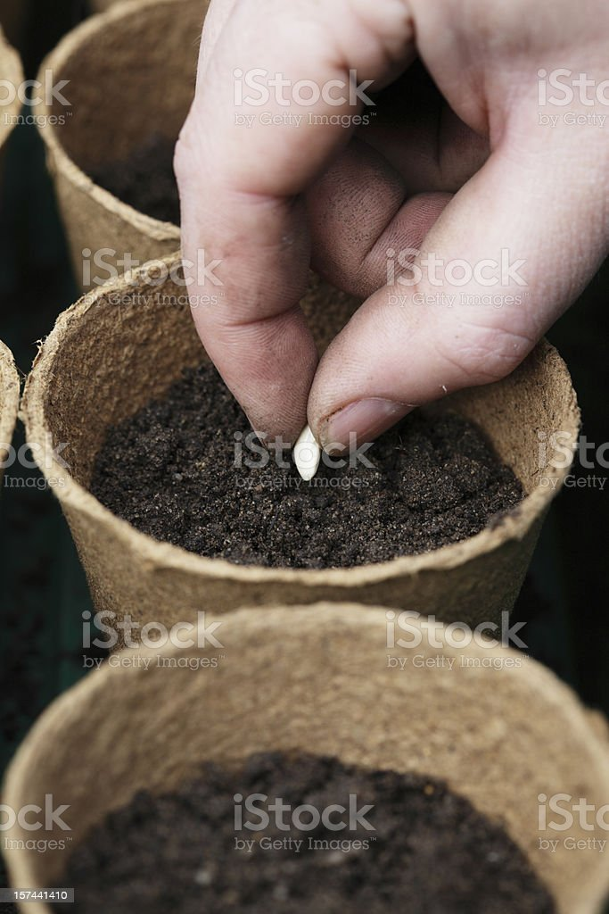 Planting Seeds royalty-free stock photo