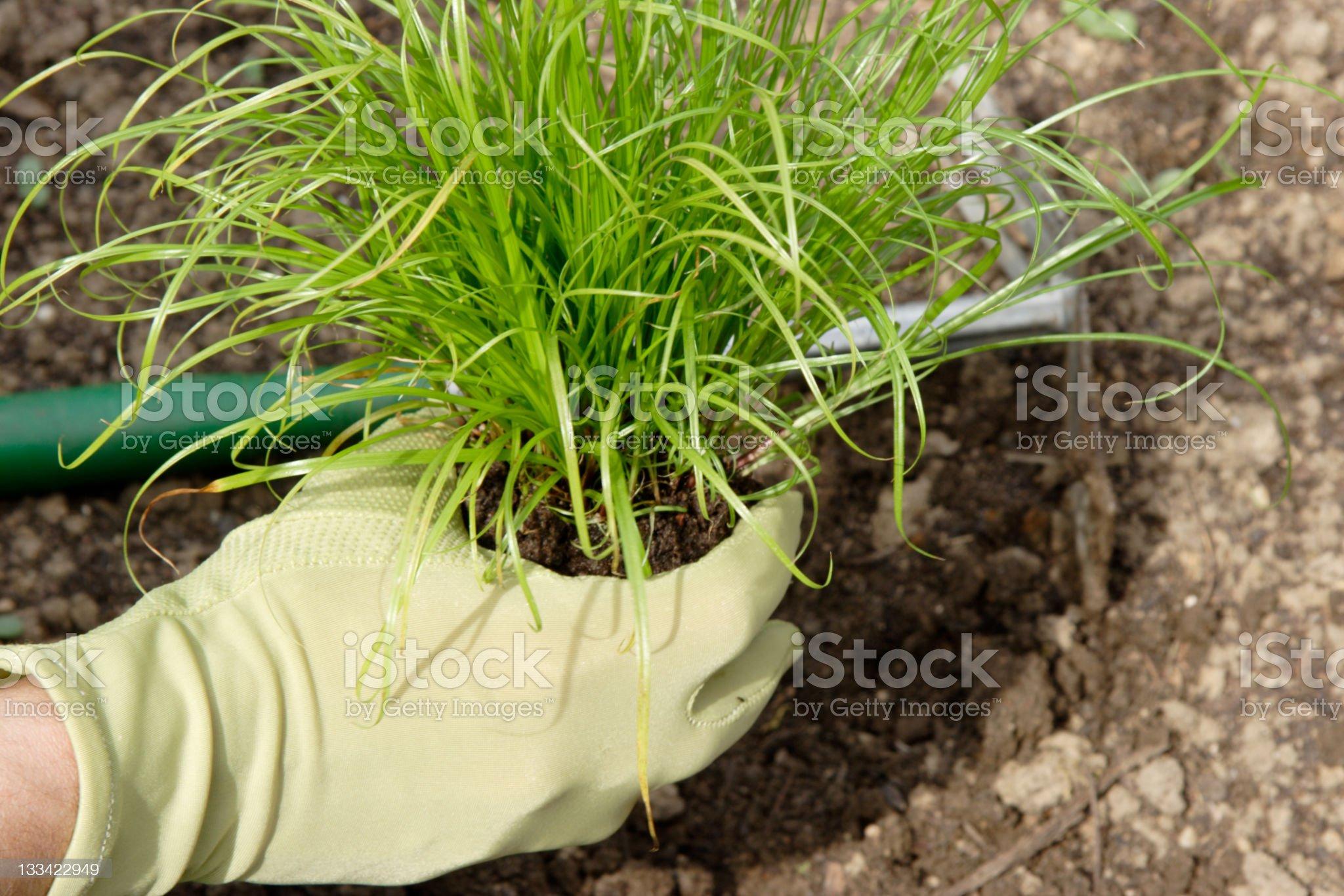 planting spring royalty-free stock photo