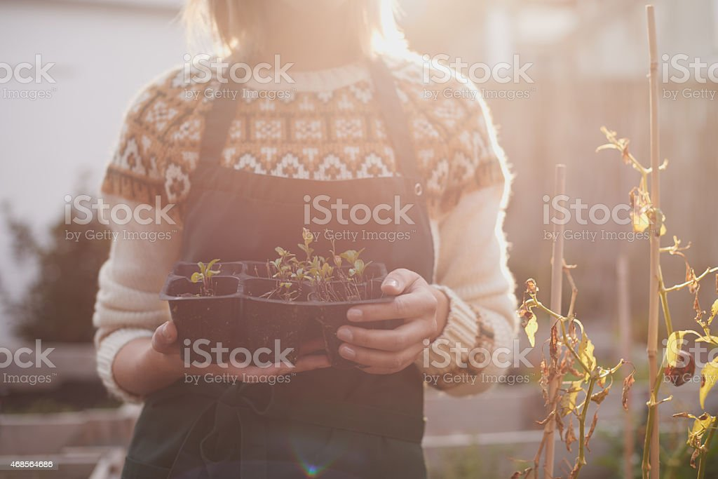 Planting sprouts stock photo