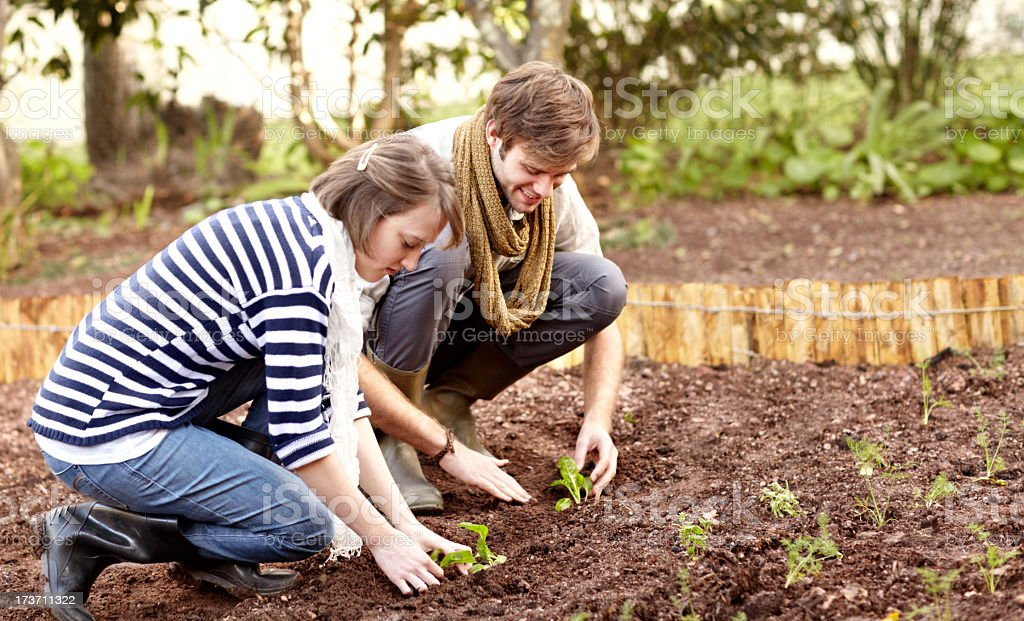 Planting their own produce royalty-free stock photo