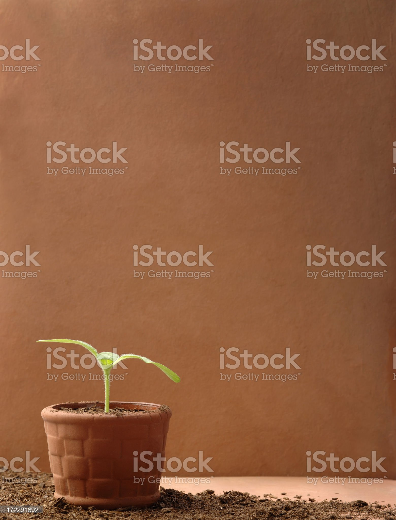 Planting Time royalty-free stock photo