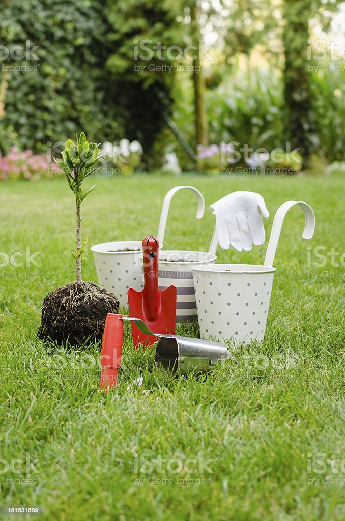 Planting tree in blooming garden stock photo