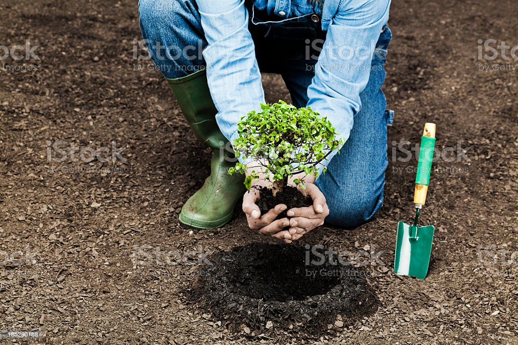 Planting tree stock photo