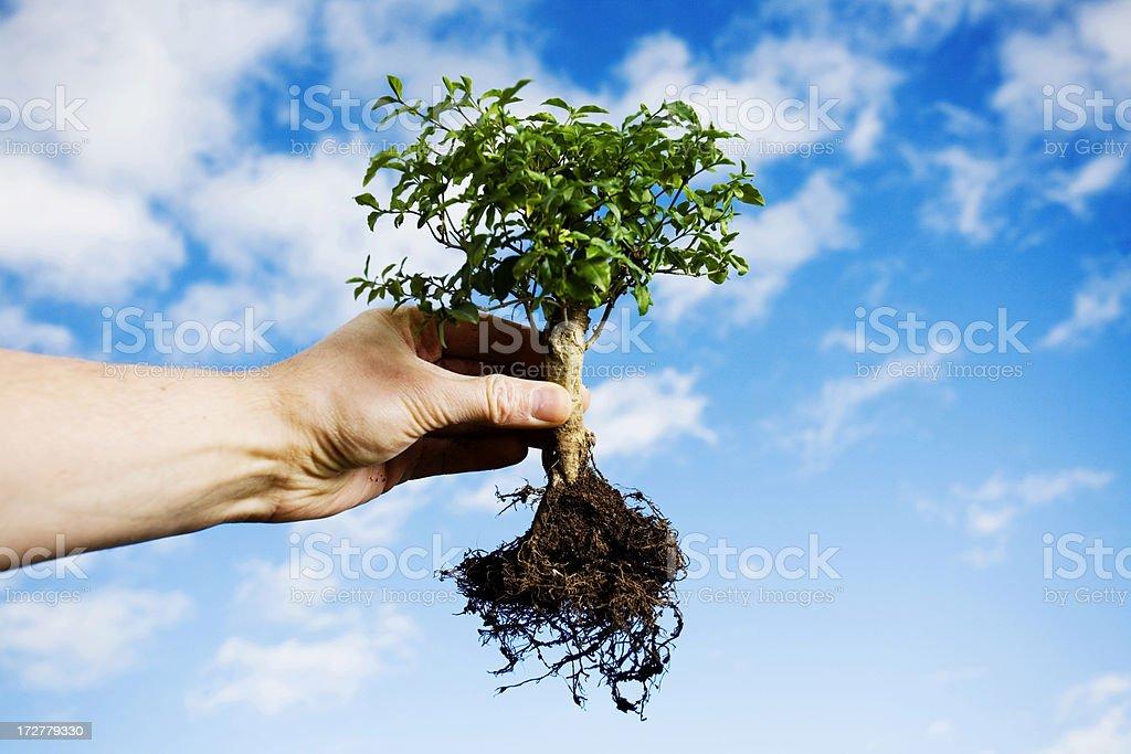 Planting trees stock photo