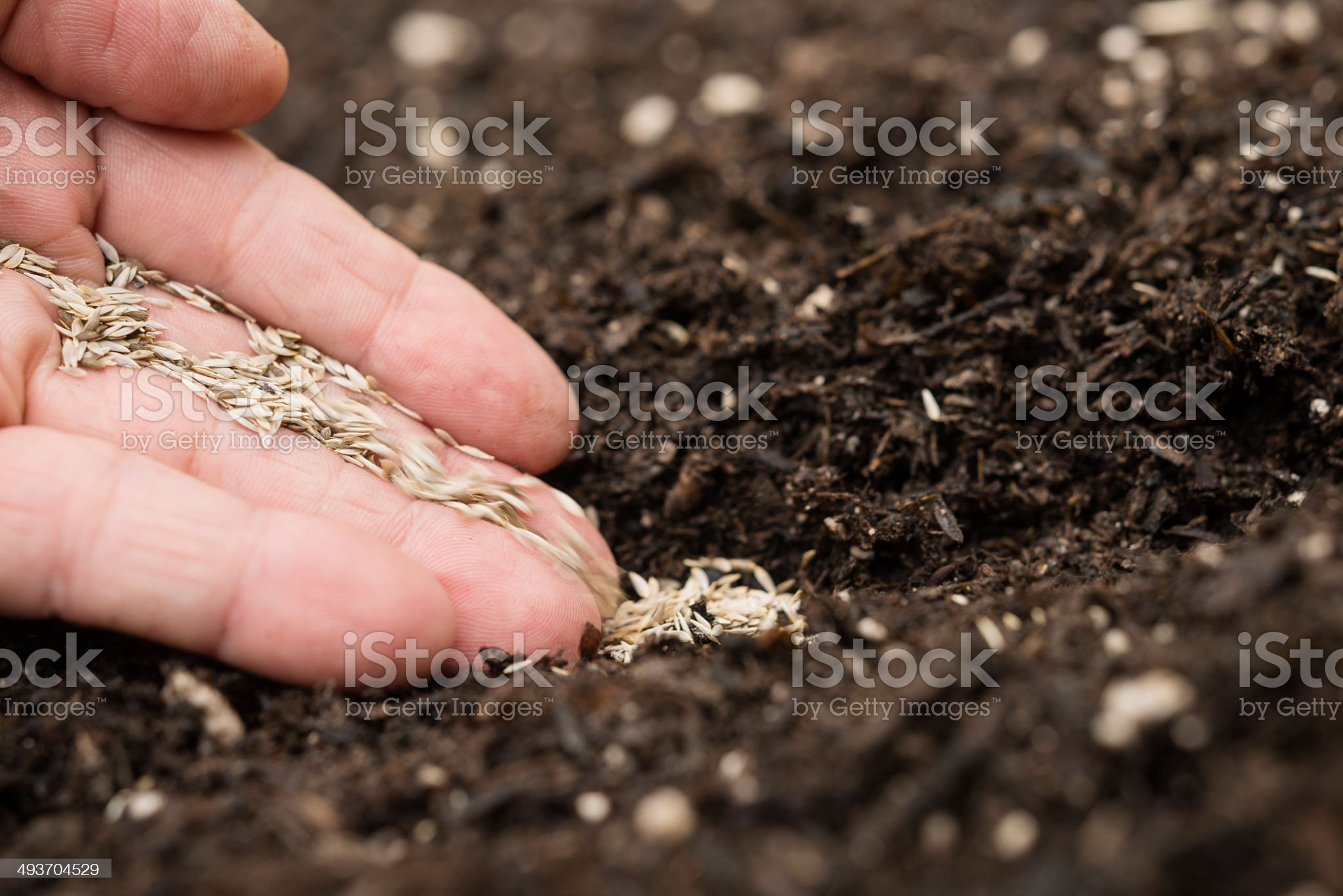 Planting vegetable seeds royalty-free stock photo