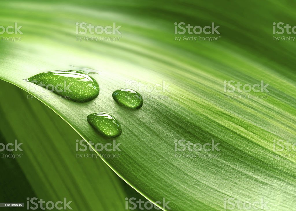 Plantleaf stock photo