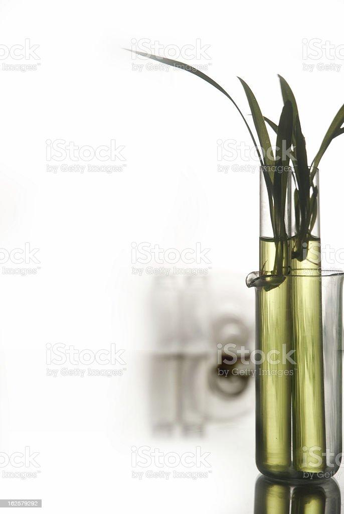 plantlet stock photo