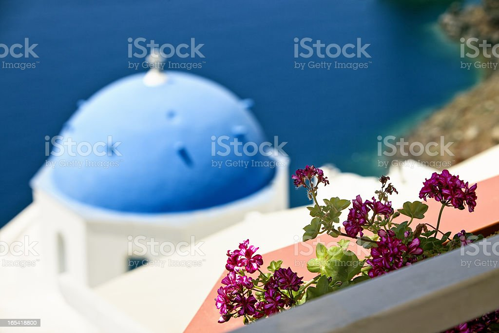 Plants above church with blue dome in Oia on Santorini royalty-free stock photo