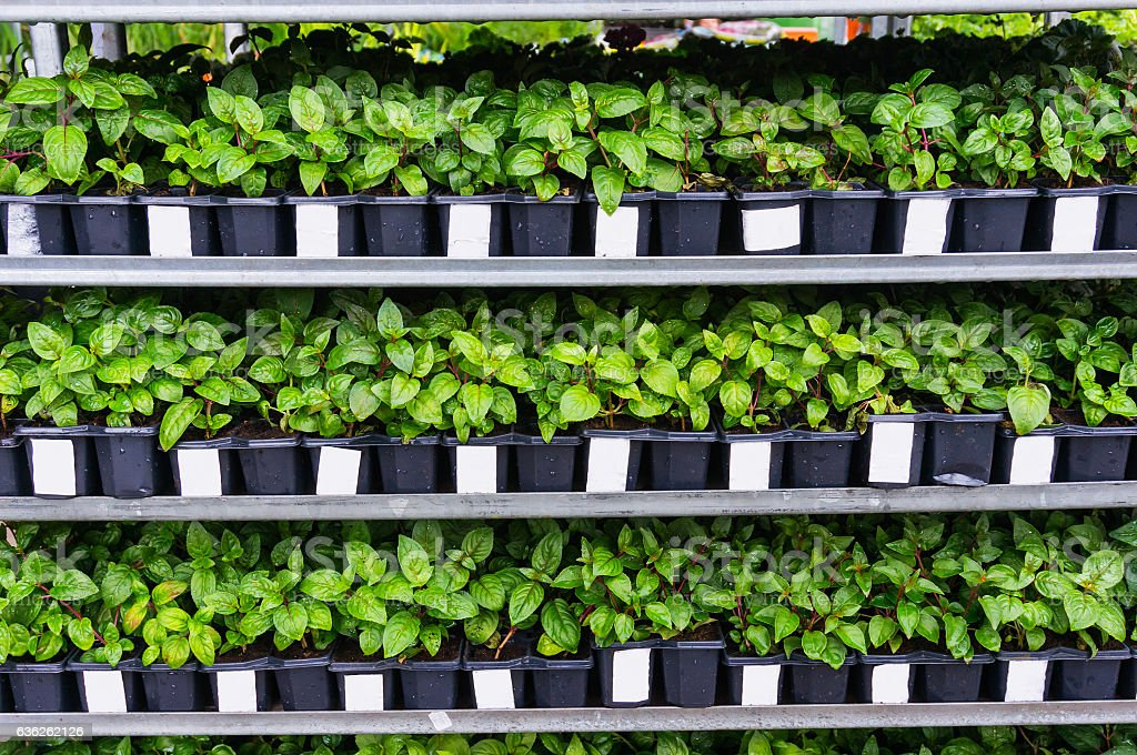 Plants and flower seedlings stock photo