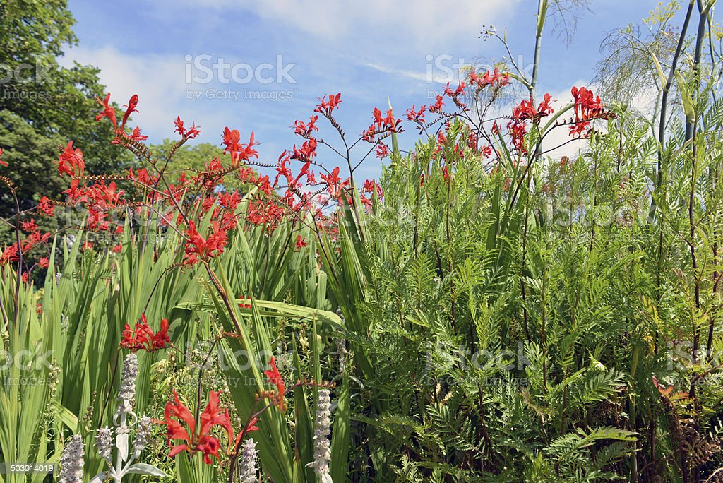 Plants and Flowers royalty-free stock photo
