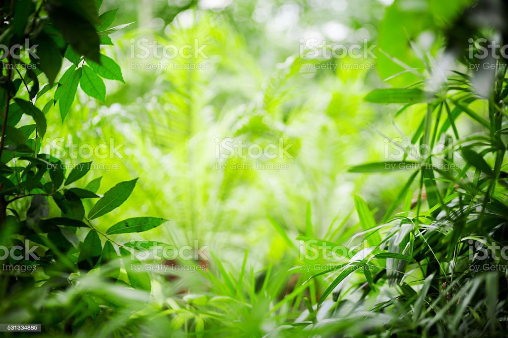 Plants And Leaves Framing Tropical Rainforest stock photo