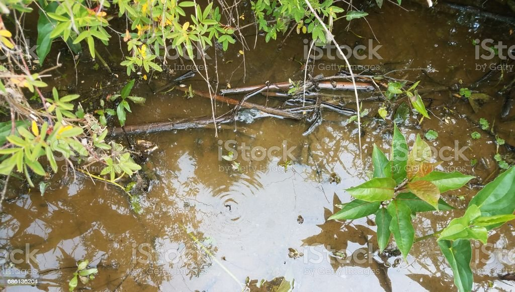 plants and muddy water with wiggling insect stock photo