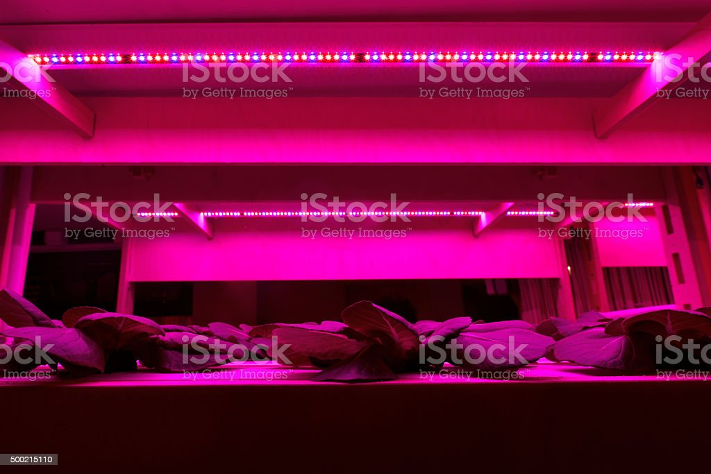 Plants are growing under the light stock photo