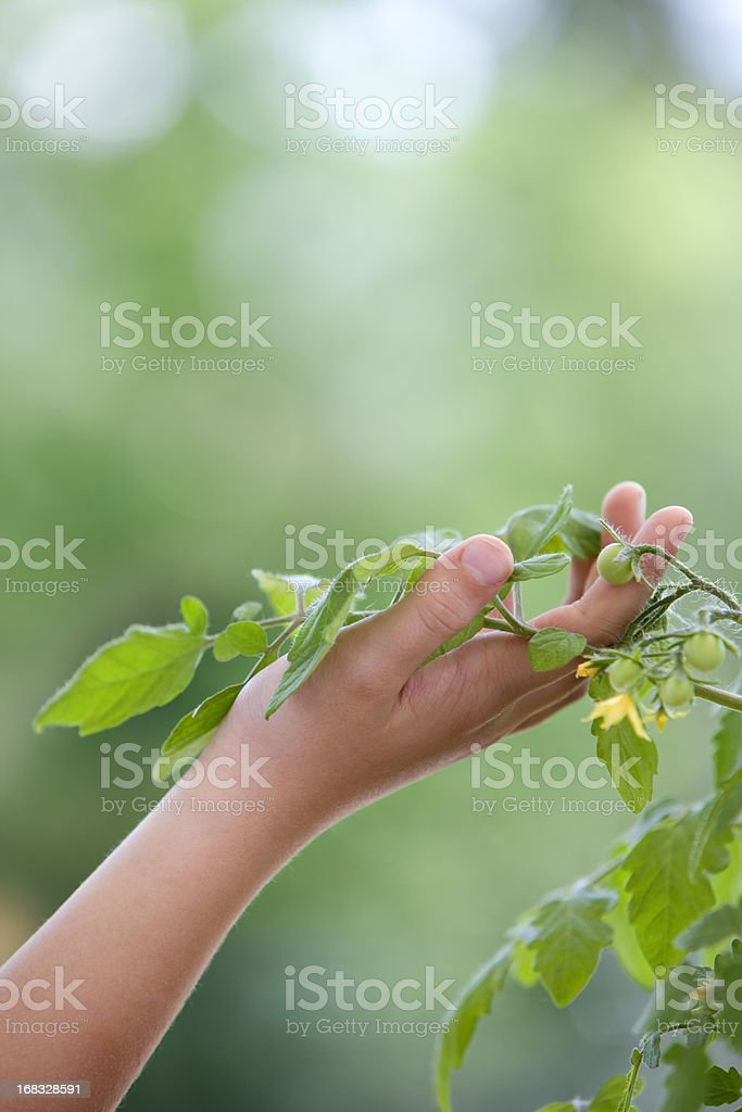 Plants are our friends royalty-free stock photo