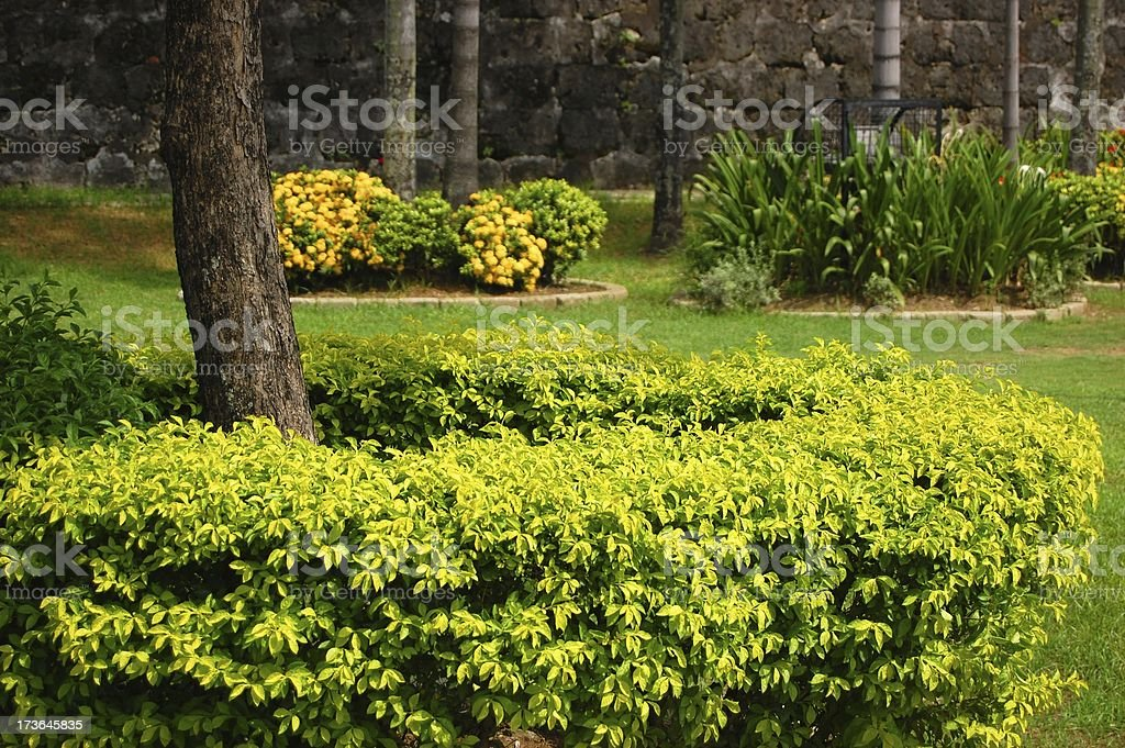 Plants around a Tree photo royalty-free stock photo