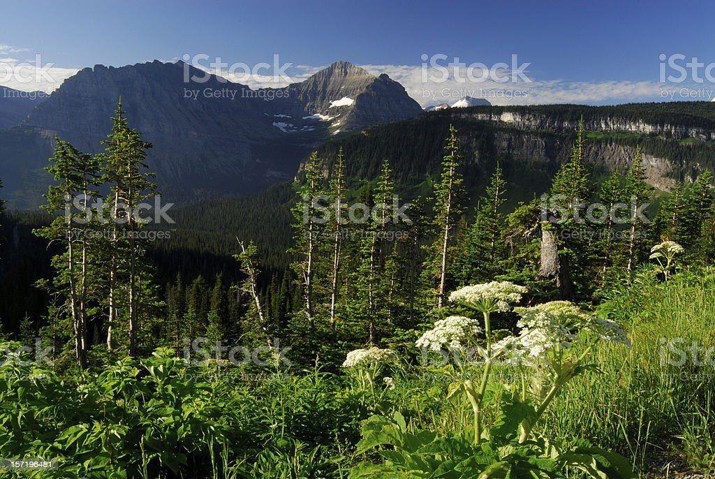 Plants at Glacier National Park stock photo