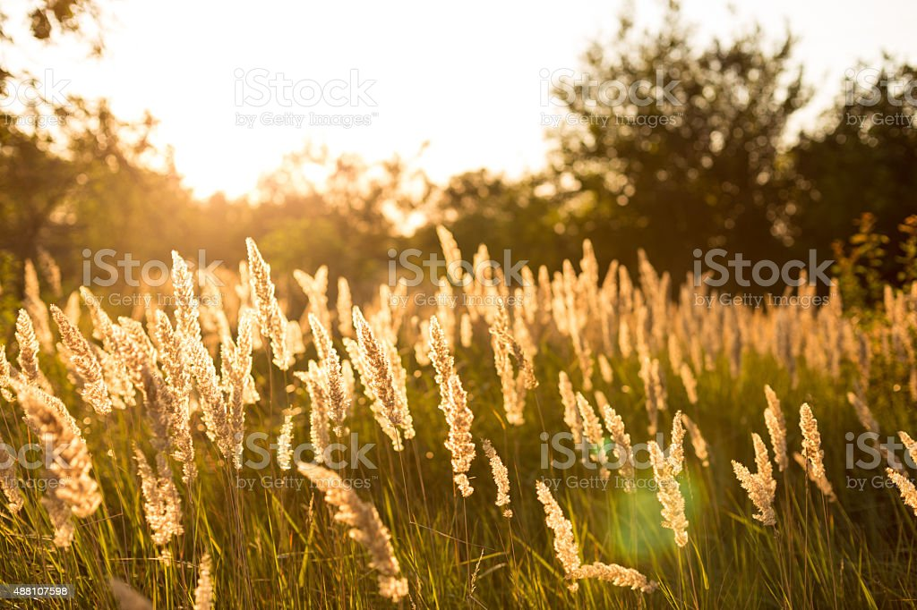 Plants at sunset stock photo