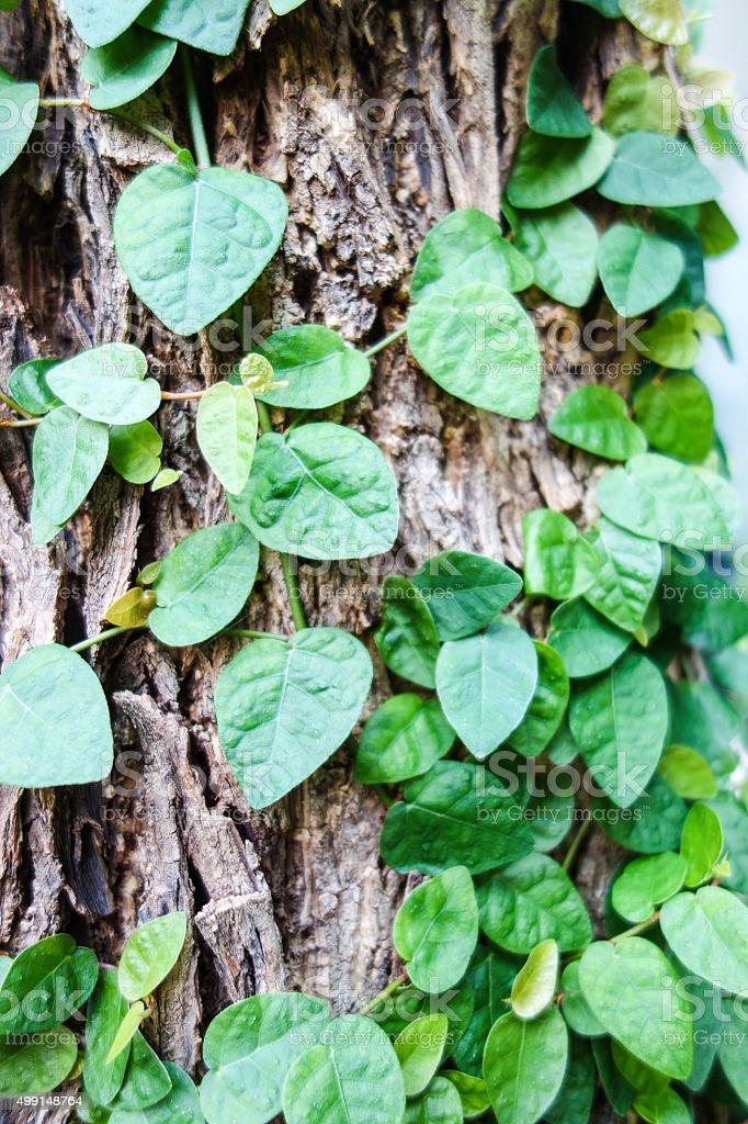 Plants Background stock photo