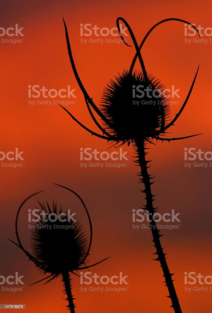 plants before red sky royalty-free stock photo
