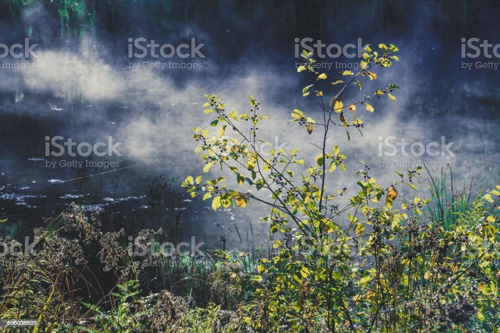 Plants By Pond stock photo