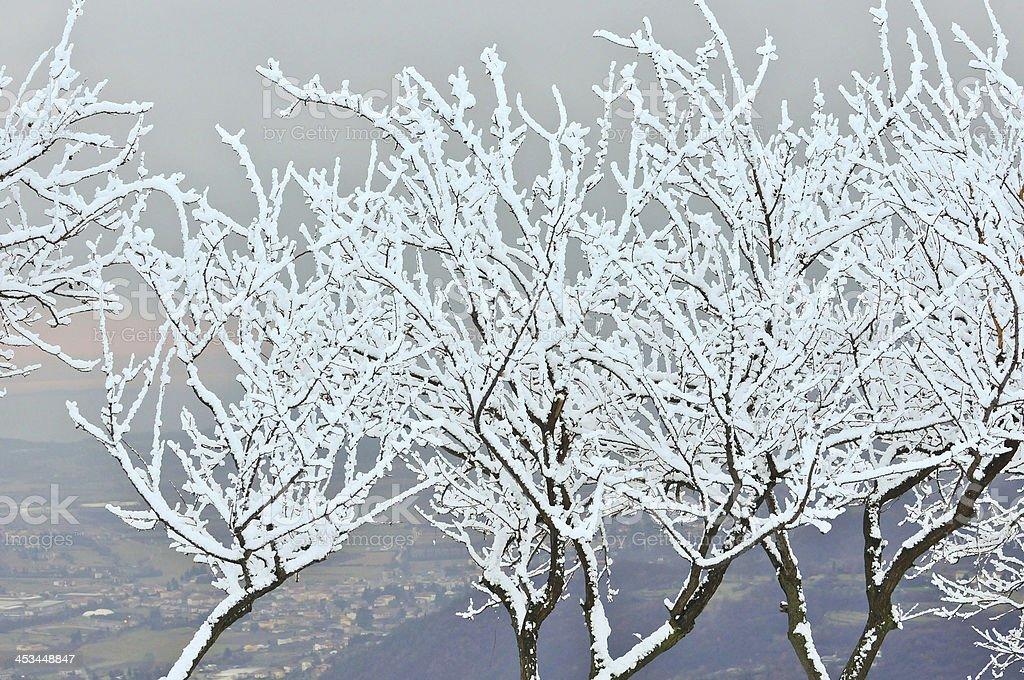 Plants frost stock photo