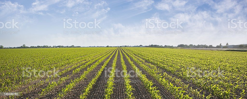 Plants growing in field stock photo