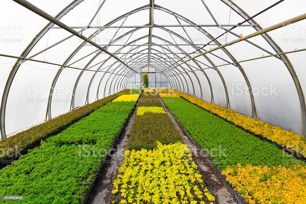 plants growing in greenhouse at seedling nursery stock photo