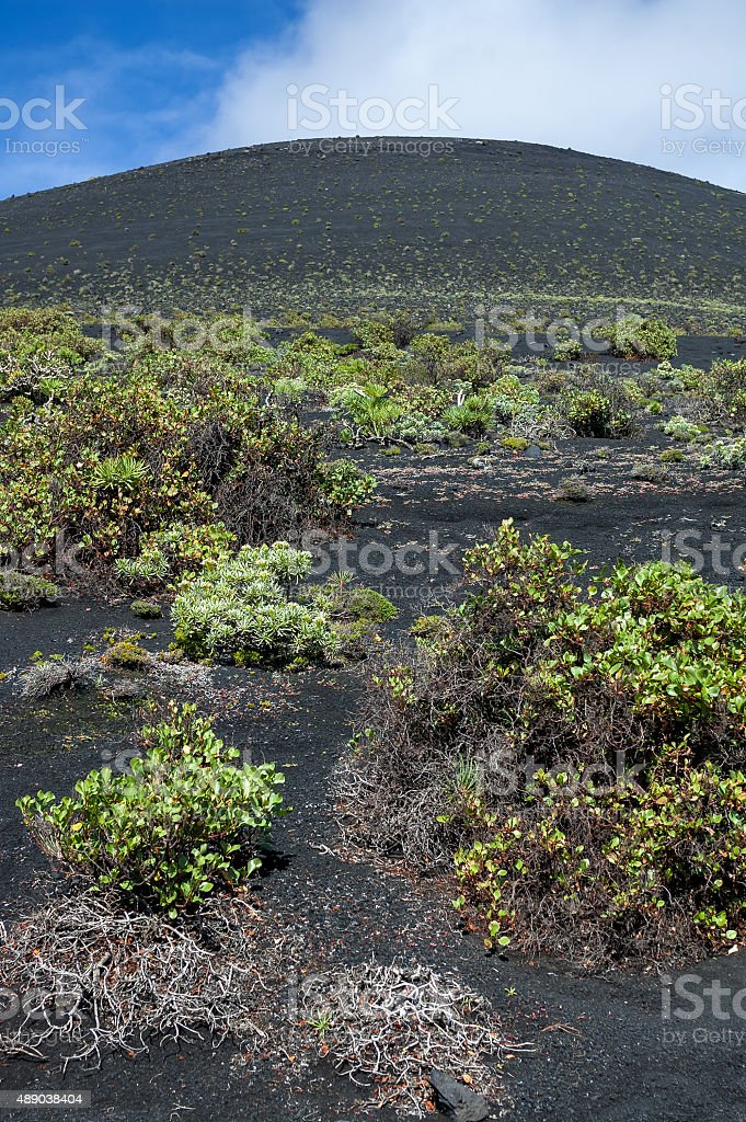 Plants growing on the nutrient-poor soil of a volcanic cone stock photo