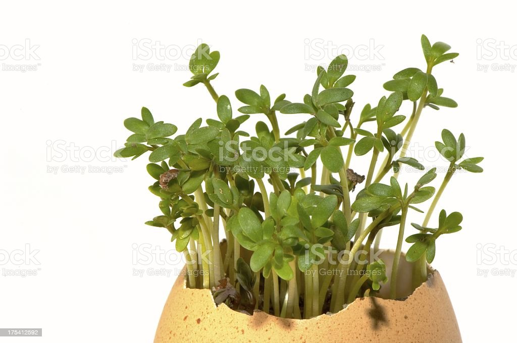 plants growing out of  egg stock photo