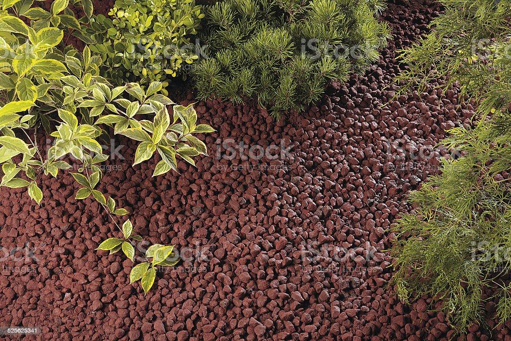 Plants growing stock photo