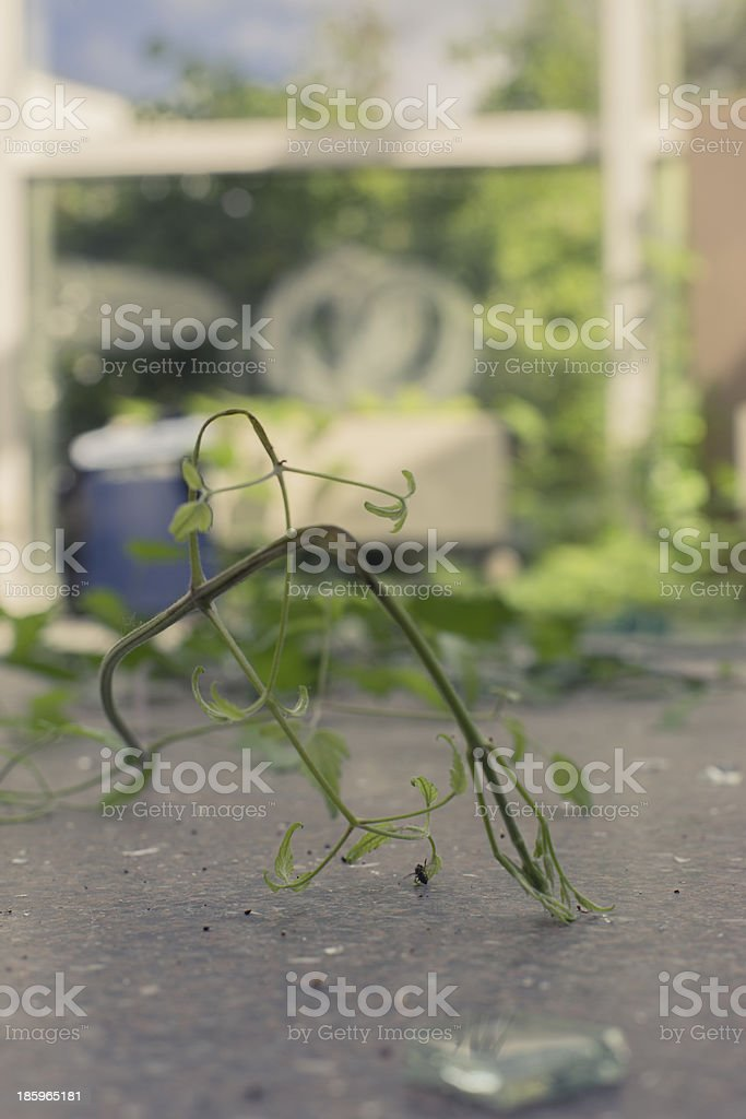 plants growing through a broken window royalty-free stock photo