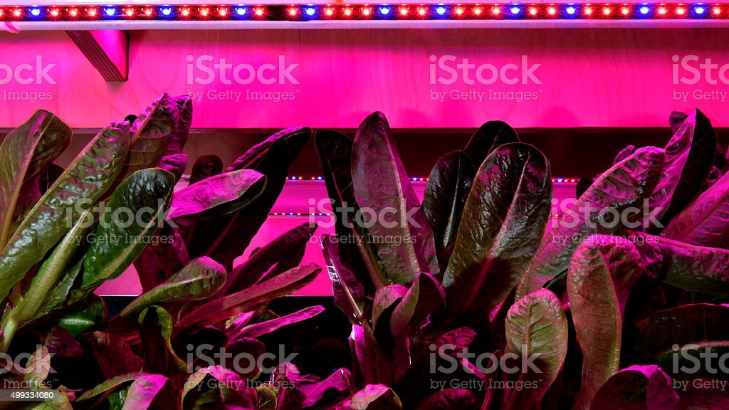 Plants growing under the LED lights stock photo