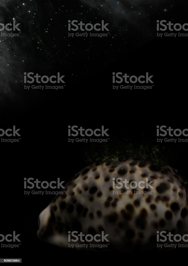 plants growing up on cowry in starry sky stock photo