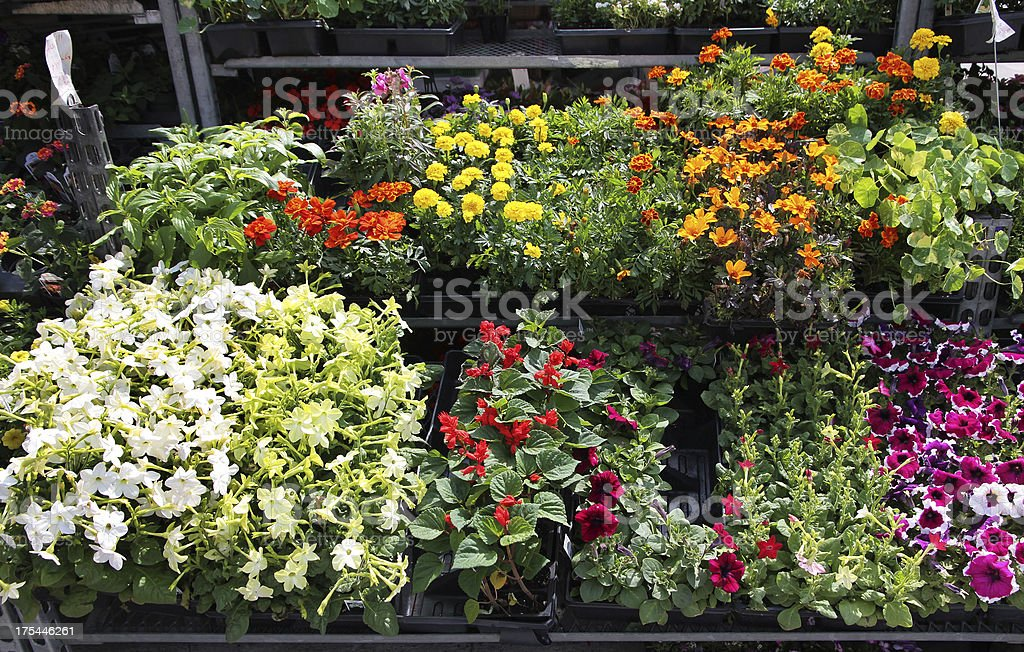 Plants grown from seeds in planters royalty-free stock photo