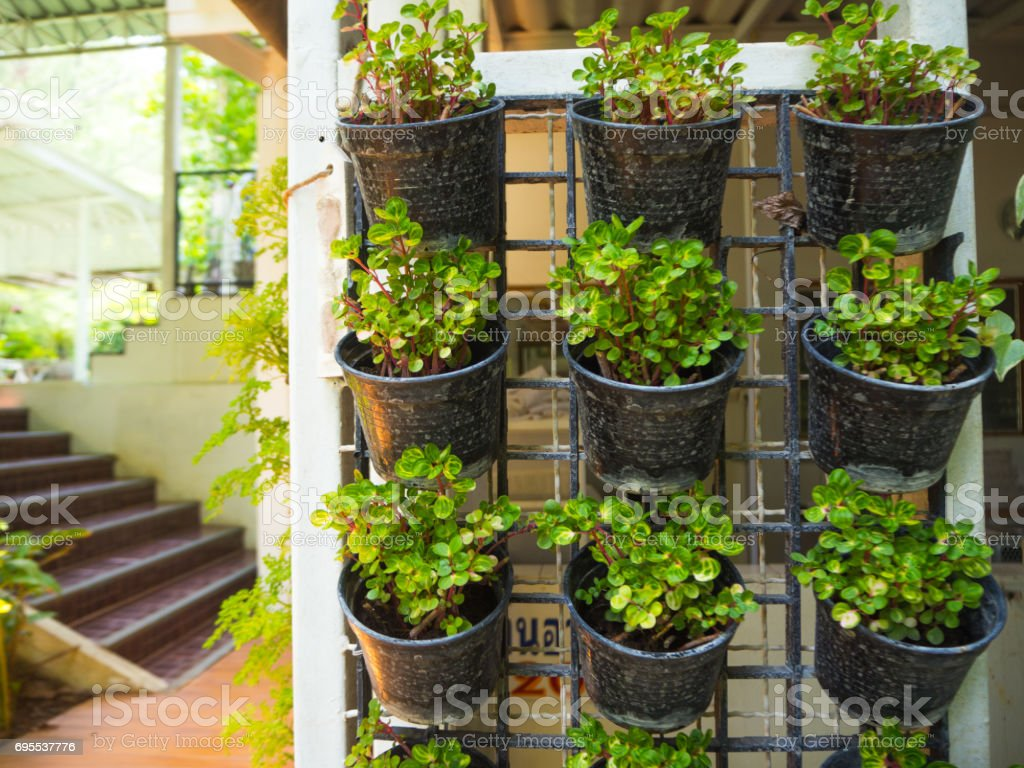 Plants grown in pots decorated on the wall. stock photo