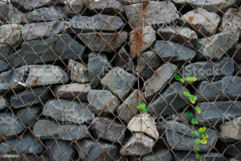 Plants growth from covered stone wall with wire mesh royalty-free stock photo