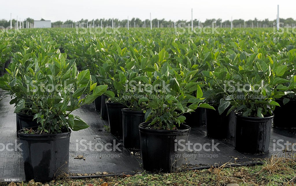 Plants in a Nursery royalty-free stock photo
