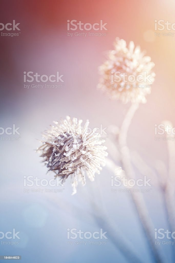 Plants in a winter garden royalty-free stock photo