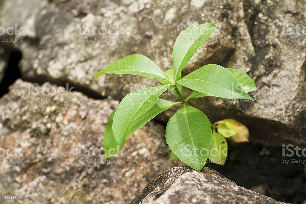 Plants in crevices of rocks. stock photo