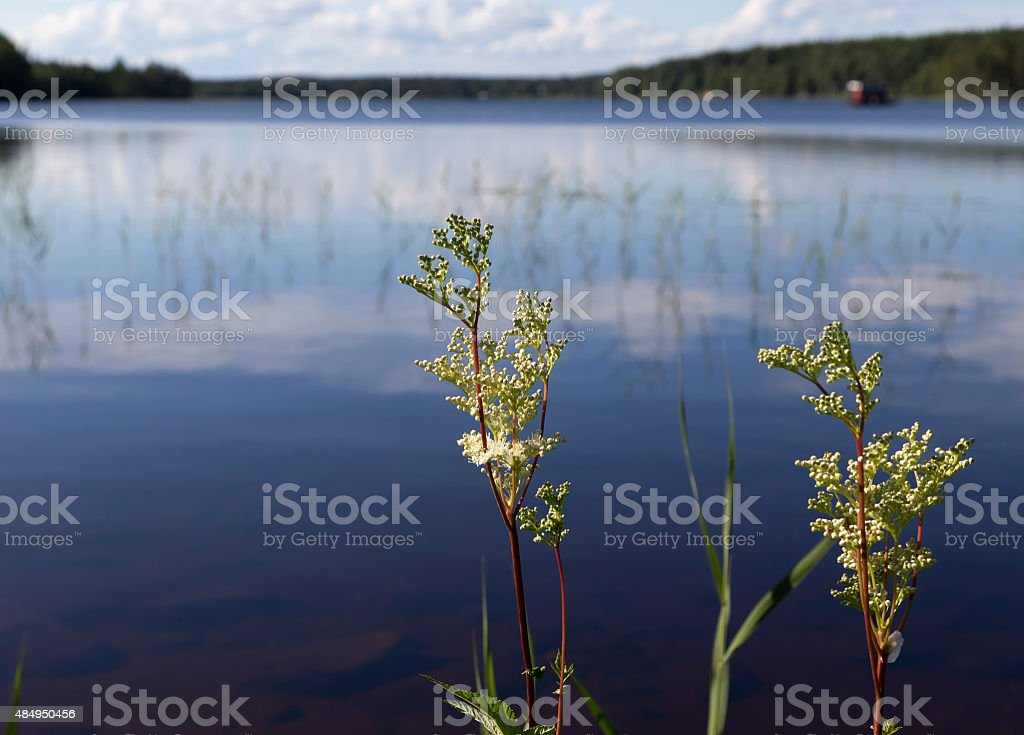 plants in front of the lake royalty-free stock photo