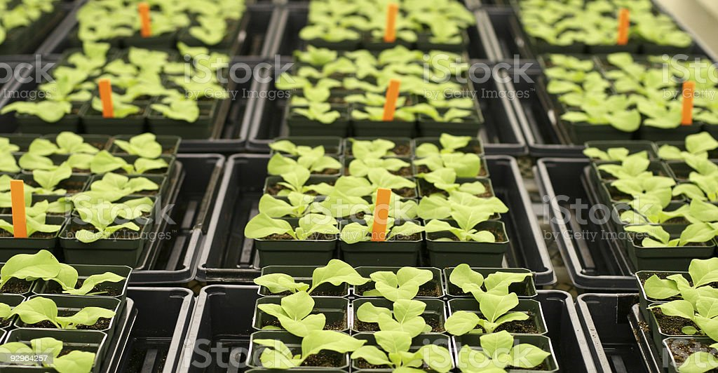 Plants in greenhouse royalty-free stock photo