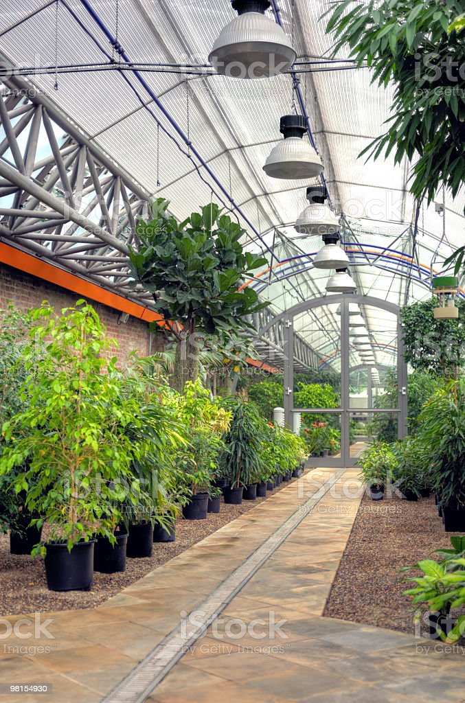 Plants in modern greenhouse royalty-free stock photo