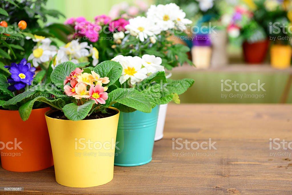 plants in pots stock photo